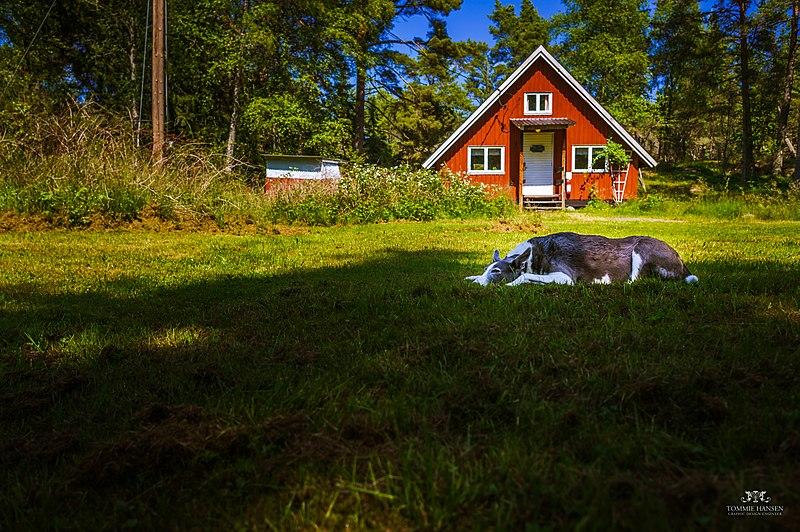 Boka en djurvänlig stuga på semestern
